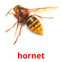 hornet picture flashcards