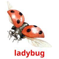 ladybug picture flashcards