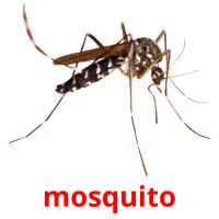 mosquito picture flashcards