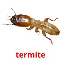 termite picture flashcards