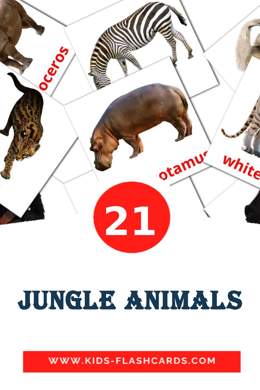 21 Jungle animals Picture Cards for Kindergarden in english