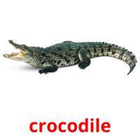 crocodile picture flashcards