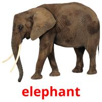 elephant picture flashcards