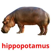 hippopotamus card for translate
