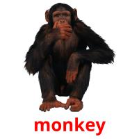 monkey picture flashcards