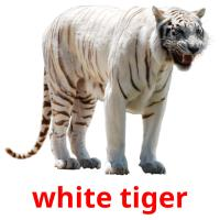 white tiger picture flashcards