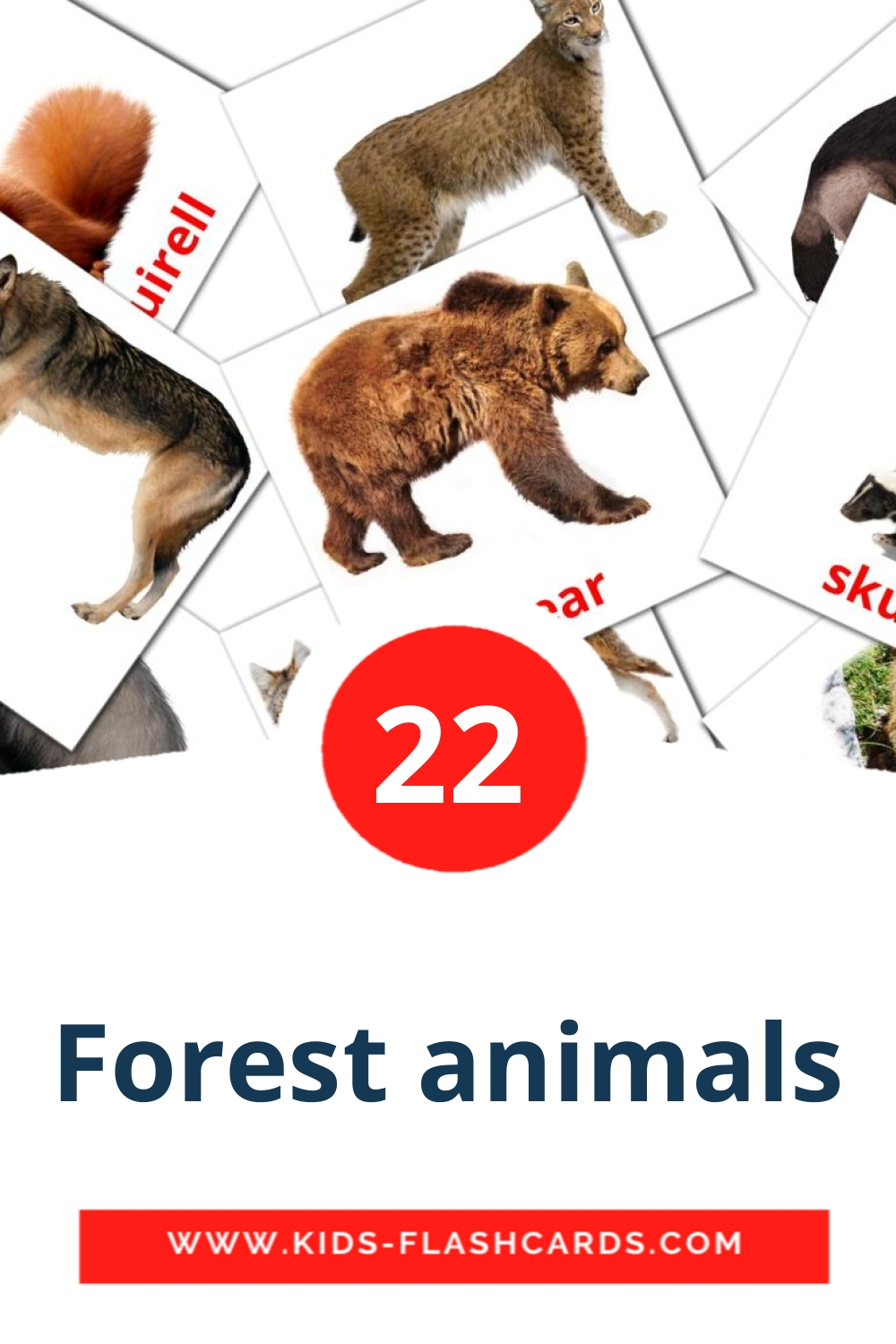 22 Forest animals Picture Cards for Kindergarden in english