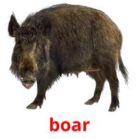 boar picture flashcards