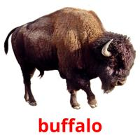 buffalo picture flashcards