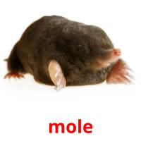 mole picture flashcards
