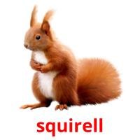 squirell picture flashcards