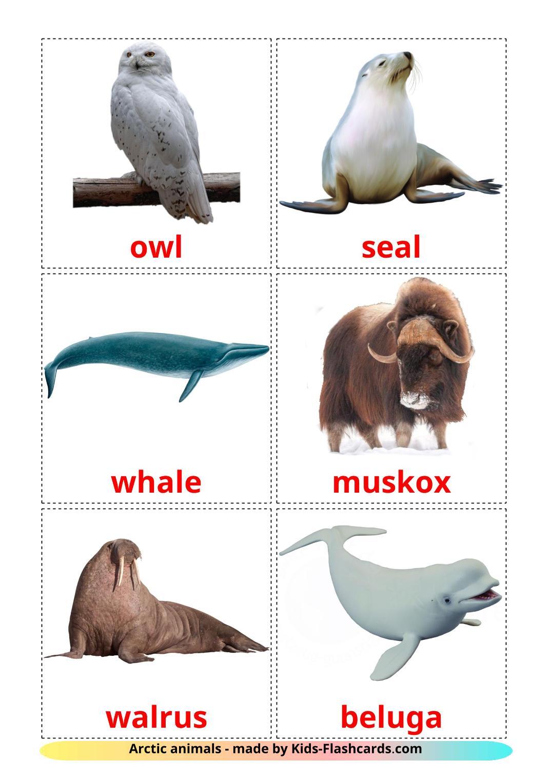 Arctic animals - 14 Free Printable english Flashcards