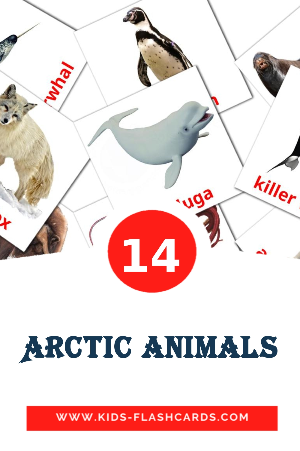 14 Arctic animals Picture Cards for Kindergarden in english