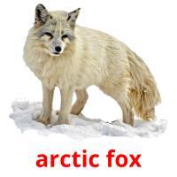 arctic fox picture flashcards