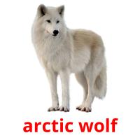 arctic wolf picture flashcards