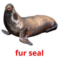 fur seal picture flashcards