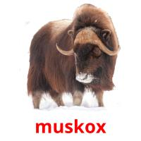 muskox picture flashcards