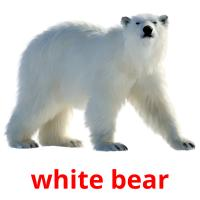 white bear picture flashcards