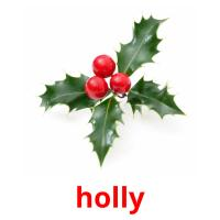 holly picture flashcards
