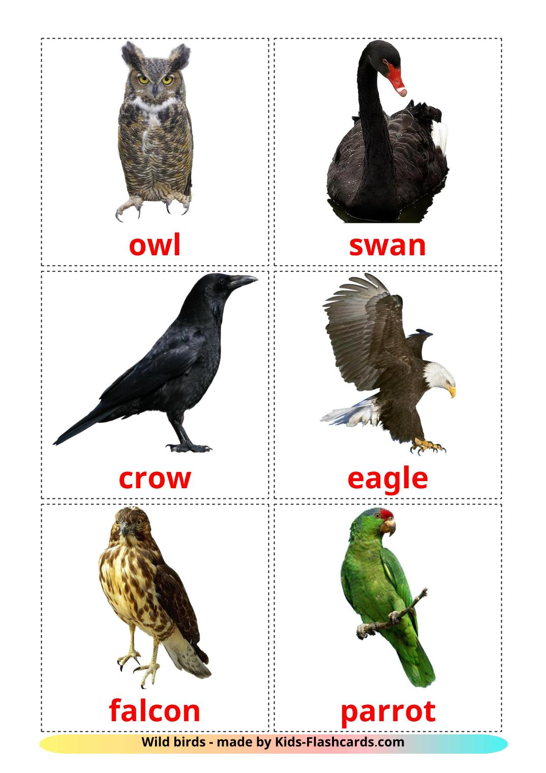 Wild birds - 18 Free Printable english Flashcards