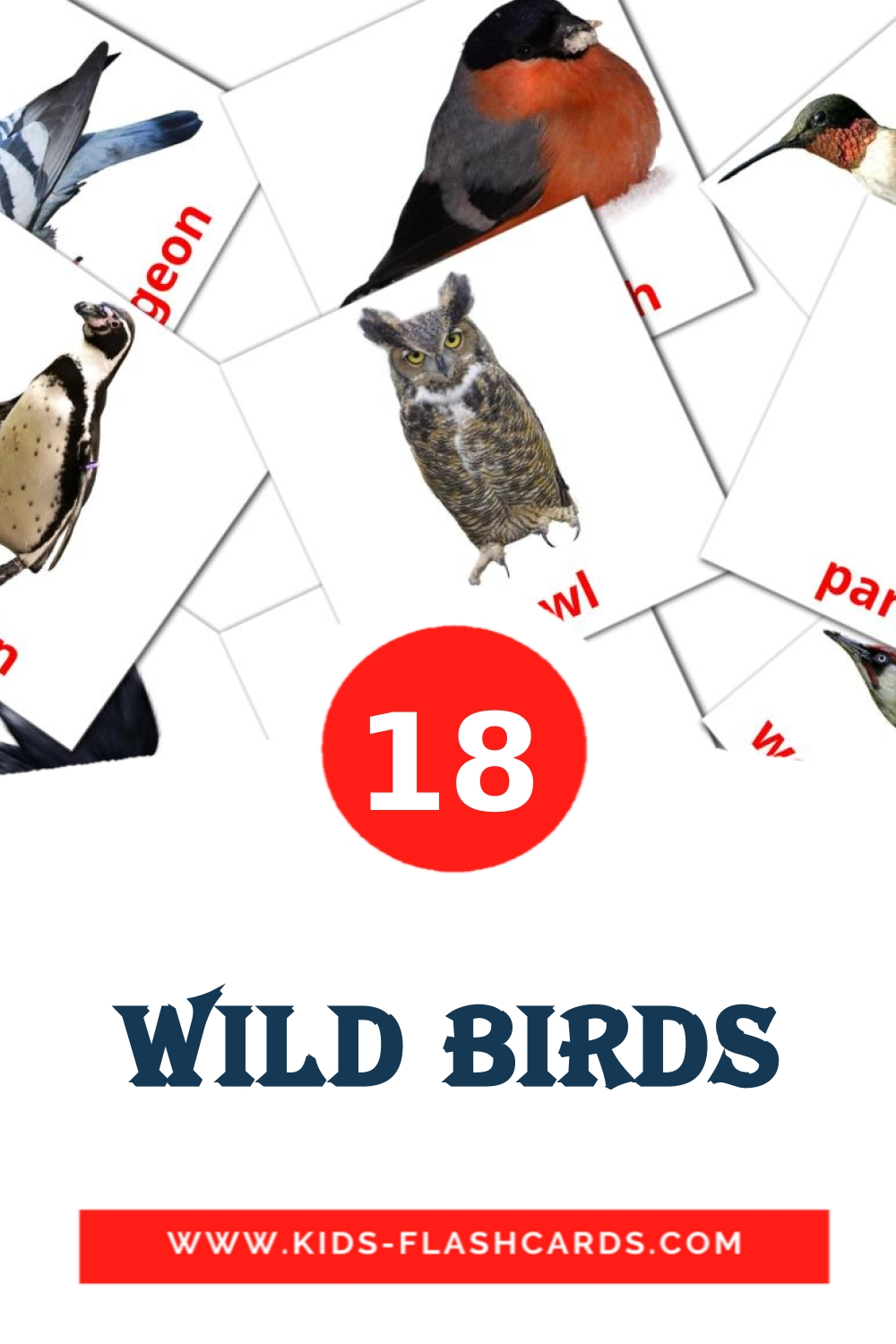18 Wild birds Picture Cards for Kindergarden in english