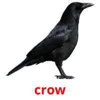 crow picture flashcards