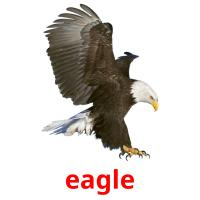 eagle picture flashcards