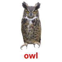 owl picture flashcards
