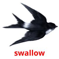 swallow picture flashcards