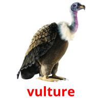 vulture picture flashcards