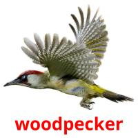 woodpecker picture flashcards