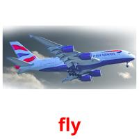 fly picture flashcards