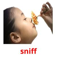 sniff picture flashcards