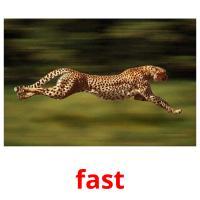 fast карточки энциклопедических знаний