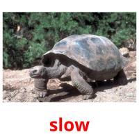 slow карточки энциклопедических знаний