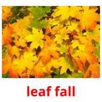 leaf fall picture flashcards