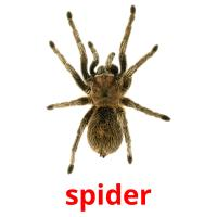 spider picture flashcards