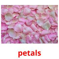 petals picture flashcards