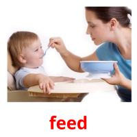 feed picture flashcards