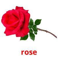 rose picture flashcards