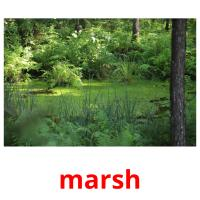 marsh picture flashcards
