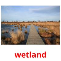 wetland picture flashcards