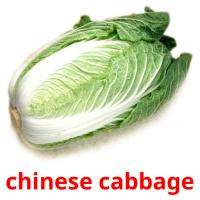 сhinese cabbage picture flashcards