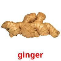 ginger picture flashcards