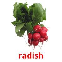 radish picture flashcards