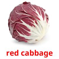 red cabbage picture flashcards