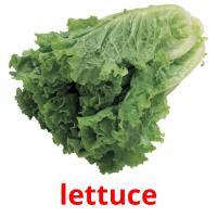 salad карточки энциклопедических знаний