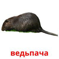 ведьпача picture flashcards