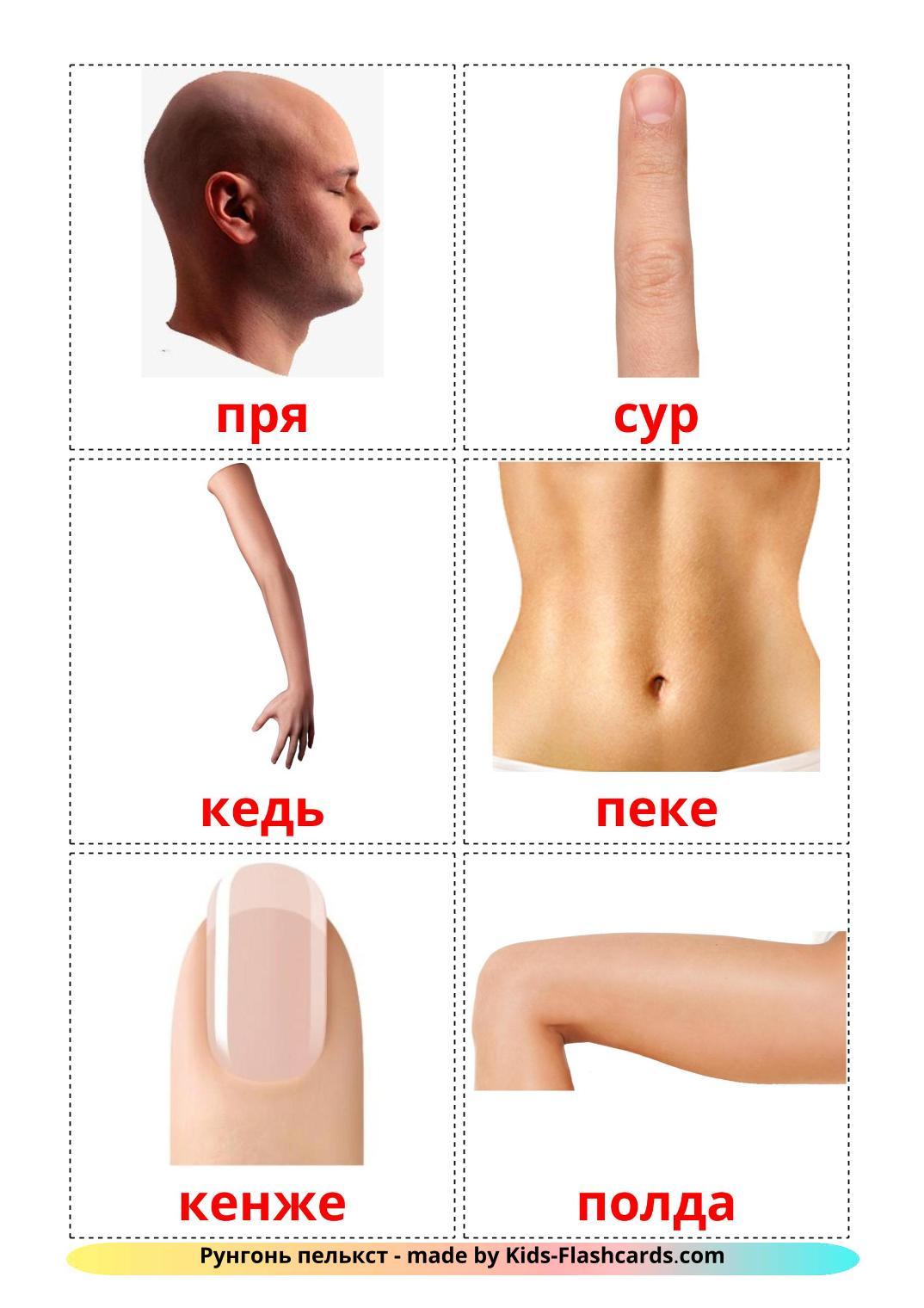 Body Parts - 26 Free Printable erzya Flashcards
