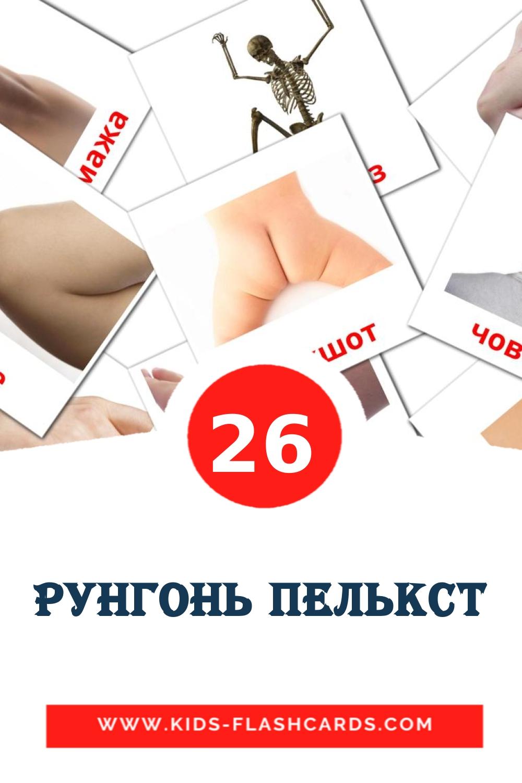 26 Рунгонь пелькст Picture Cards for Kindergarden in erzya